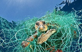 Turtle caught in net 2